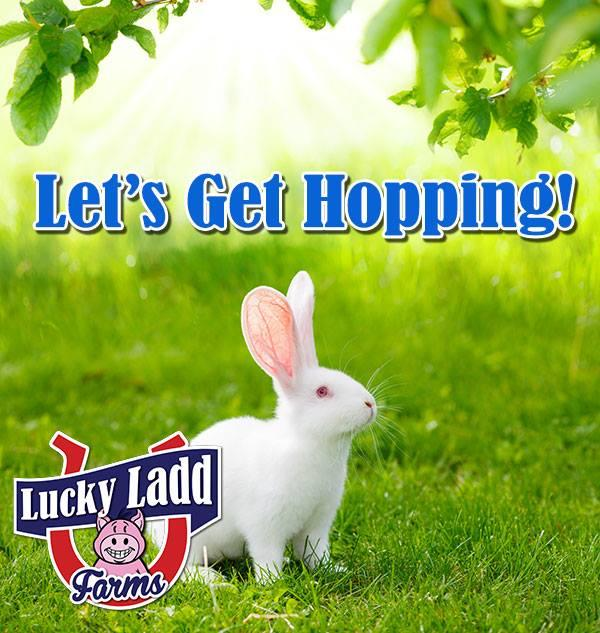 Image result for Easter Festival lucky laDD